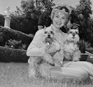 Shirley jones dogs